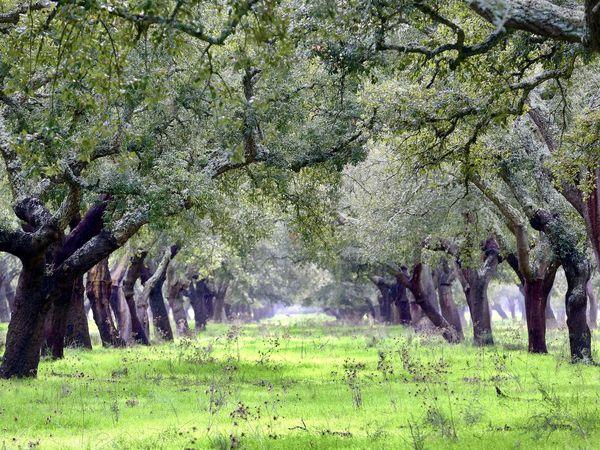 Pêle mêle sur la route, les incroyables forêts de chênes liège, les cigognes de plus en plus nombreuses, quelques moulins plein de charme qui nous rappellent le Portugal d'antan puis la découverte de la ville native de Vasco de Gama, SINES et ses vagues déchainées. Le plaisir de flâner et s'abandonner à l'inconnu.... la route est encore longue et les détails semblent infinis pour peu qu'on soit attentif à la poésie !!!