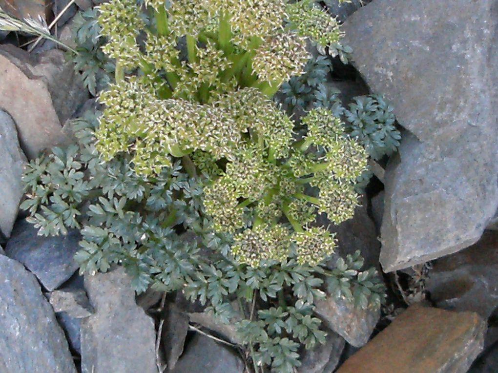 Au fil des saisons, Evelyne notre jardinière arpente les Pyrénées et nous ramène de belles photos très Botaniques...