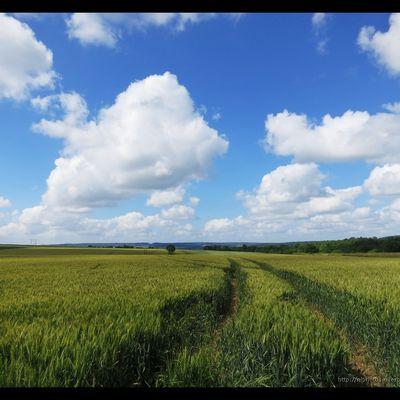 Quelques traces dans les champs