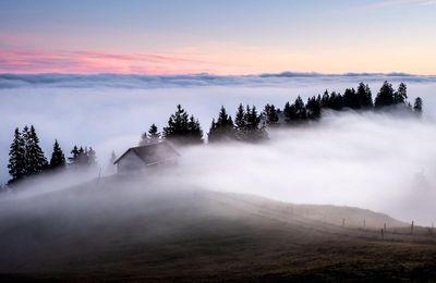 Nature - Brouillard - Maison - Sapins - Photographie - Wallpaper - Free