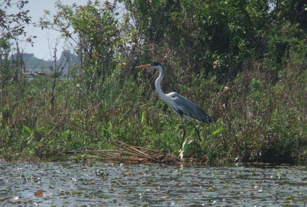 du parc de Quebrada de los Cuervos à Esteros del Ibera