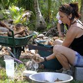 Faire de l'huile de coco vierge - les abeilles de Lifou