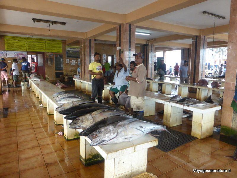 Village de pêcheurs de Negombo
