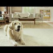Amazon Alexa Moments: Petlexa (Amazon Echo Commercial)