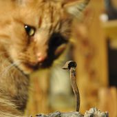 Un petit cadeau avec une visite en présence du chat - l'exposition de l'entre-fêtes