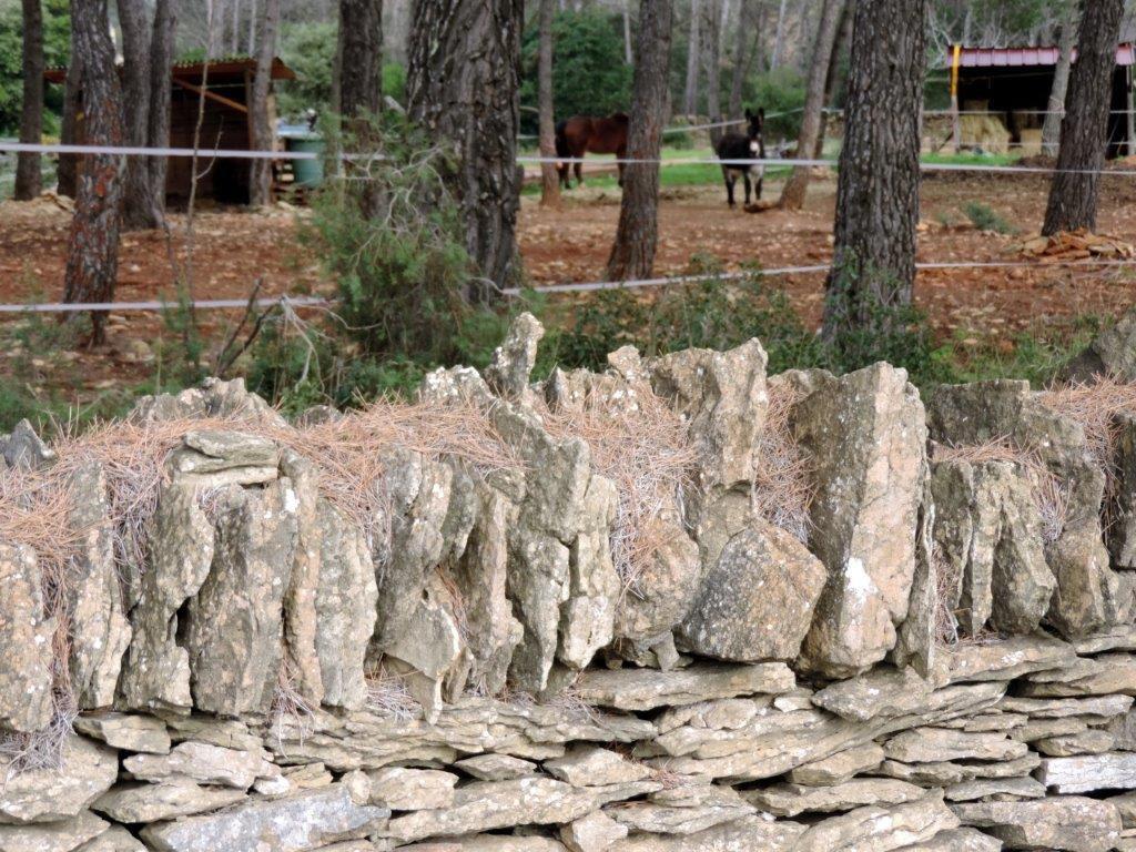 2012-01-04 Des plaines Baronnes au Télégraphe
