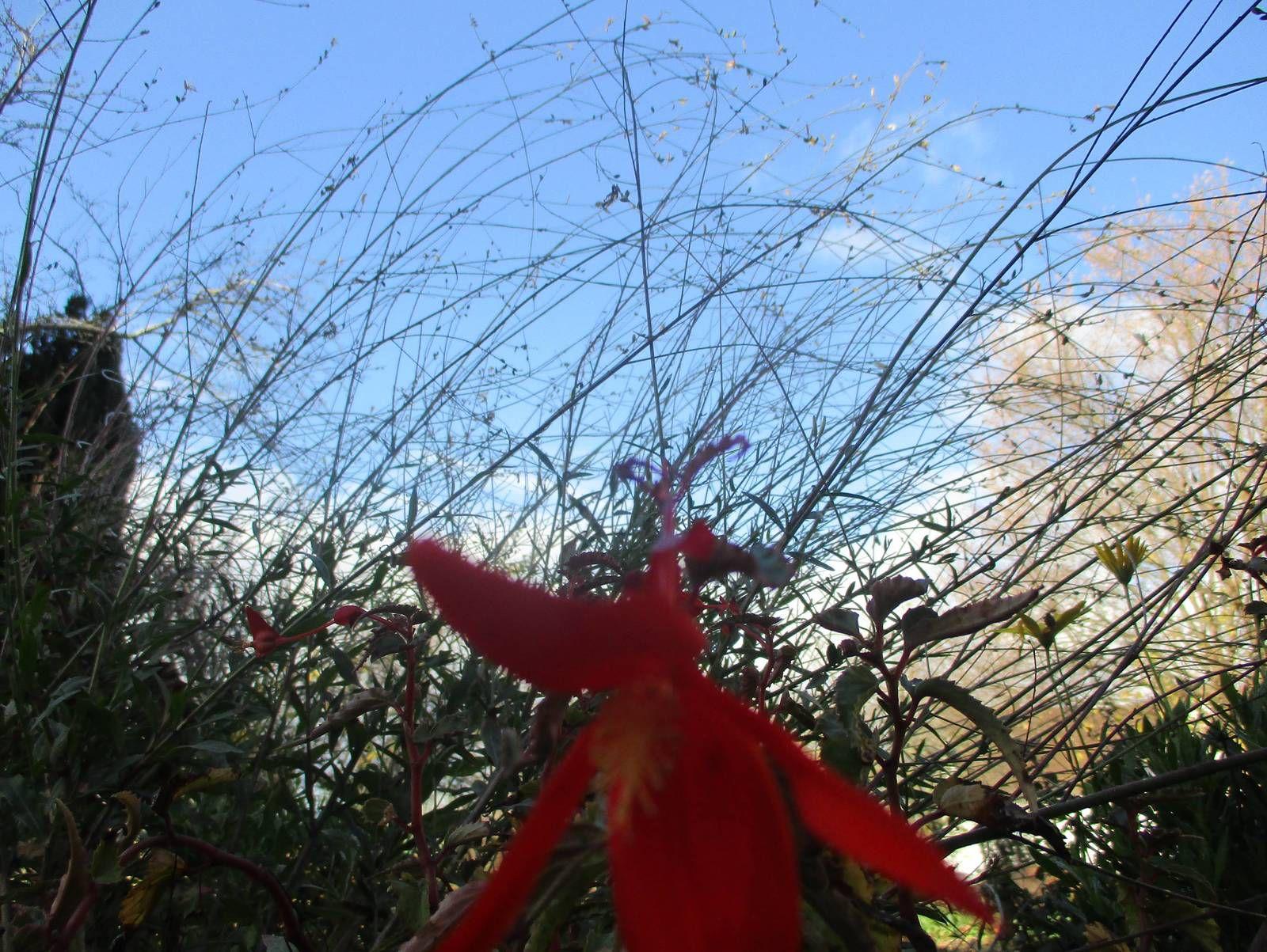 Mon jardin un 20 novembre