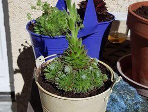 Cactus et compagnie...