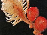 Un cycas et non pas un palmier ... Le pollen du cône mâle de M. Cycas est emporté par le vent... Jusqu'aux ovules de Mme Cycas qui n'attendent que cela ...