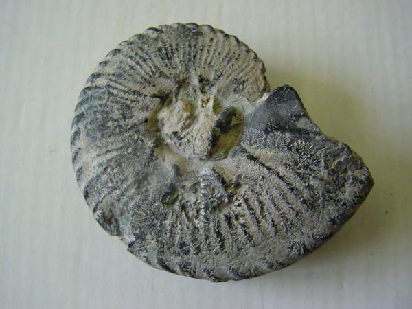 <p> Région très intéressante pour les paléontologues, les fossiles s'y rencontrent en masses. </p> <p> Les terrains sont datés stratigraphiquement du Dévonien au Quaternaire. Le Jurassique et le Crétacé sont les plus visibles. </p>