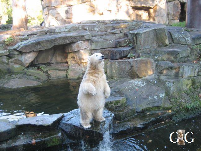 Erinnerung an Knut 2007