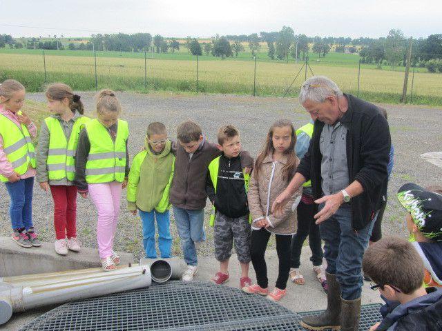 Monsieur Robidel nous montre l'arrivée de l'eau usée après avoir passé le premier bassin de roseaux.