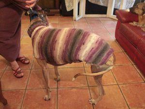 manteau en laine avec son col roule  pour galgo taille classique fait pour sos chiens galgos
