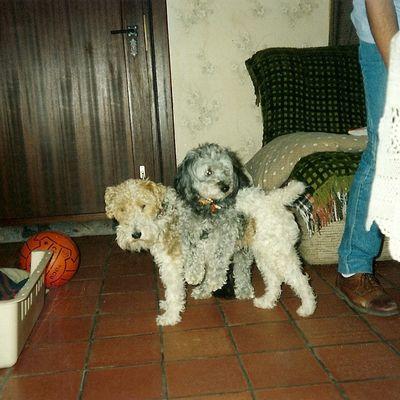 Nos chiens adorés, et les autres