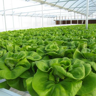 Nutrient Solution in Hydroponics