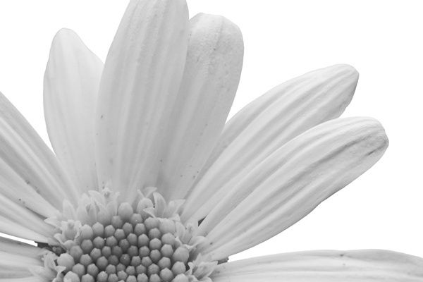 Minimalistic approach in black and white...