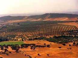 La région de Bairrada  au Portugal