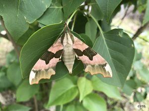 ... en découvertes entomologiques et botaniques