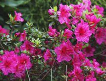 Un Jardin printanier