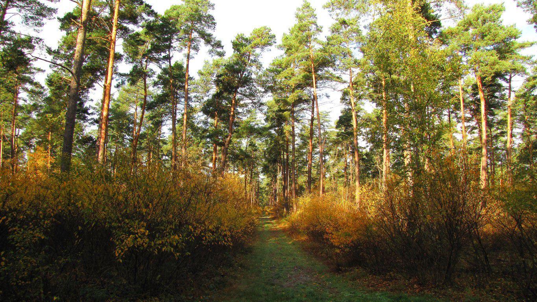 Randonnée en forêt de Compiègne_les Tournantes de la Muette et sous la Tête Saint-Jean