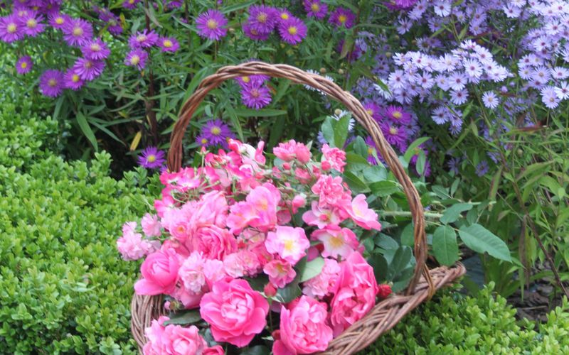 """Bouquet """"Only pink roses"""""""