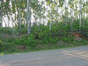 Vues du terrain situé à 5km de Mananjary en 2004.