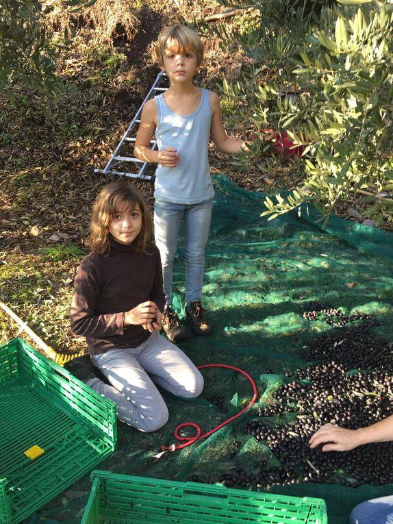 Abbiamo colto le olive