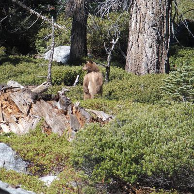 Road Trip USA : Yosemite