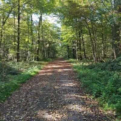 Le Bois de Verrières, un vrai poumon vert dans le sud-ouest de Paris