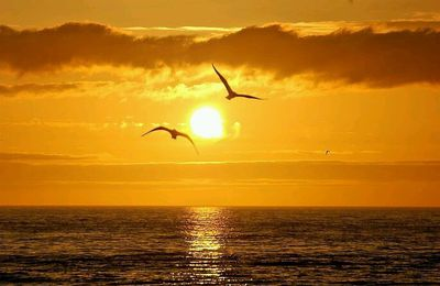 Mer - Soleil - Mouettes - Mer - Couleurs - Orange - Picture - Free