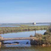Une croisière fluviale en Camargue