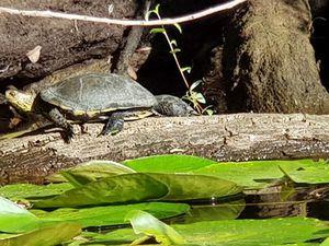 Les Blogs à l'honneur : De tortues en aiguilles