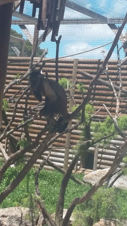 Une journée au zoo de la Barben