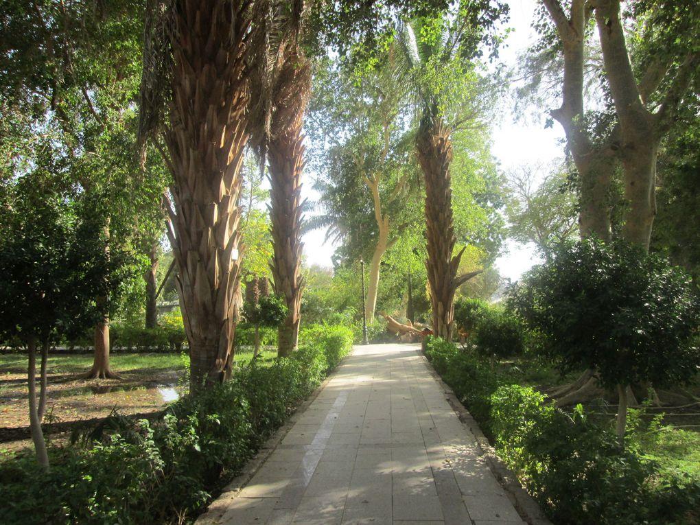 Croisière sur le Nil..... Pour le quatrième jour, le site d'Assouan dont le temple de Philae.