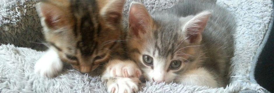 Samedi 24 novembre - 11 h à 17 h - Journée d'adoption chatons