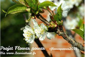 Le pouvoir des fleurs du lundi. 20