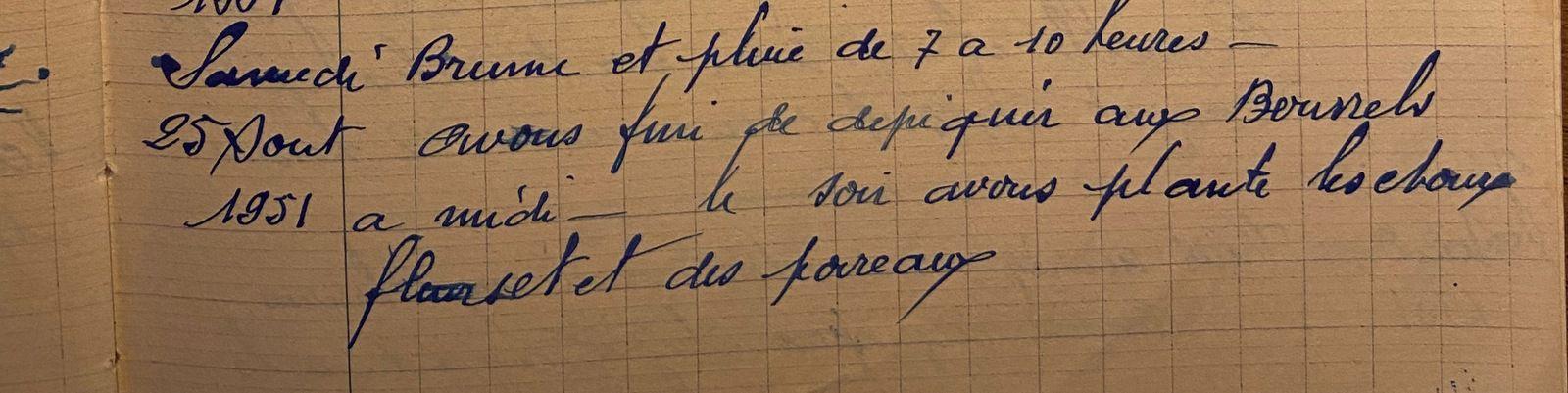 Samedi 25 août 1951 - Choux-fleurs