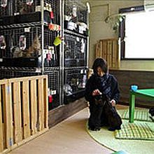 Bares japoneses para toman café con animales