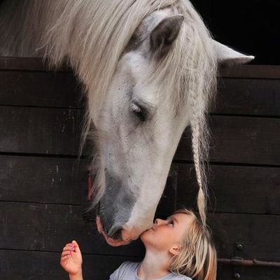 Amour animaux