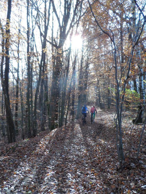 Puis nous arrivons à Saint Héand par Champcarté et nous filons dans le bois Sonnier qui nous déroule son tapis de feuilles rousses.