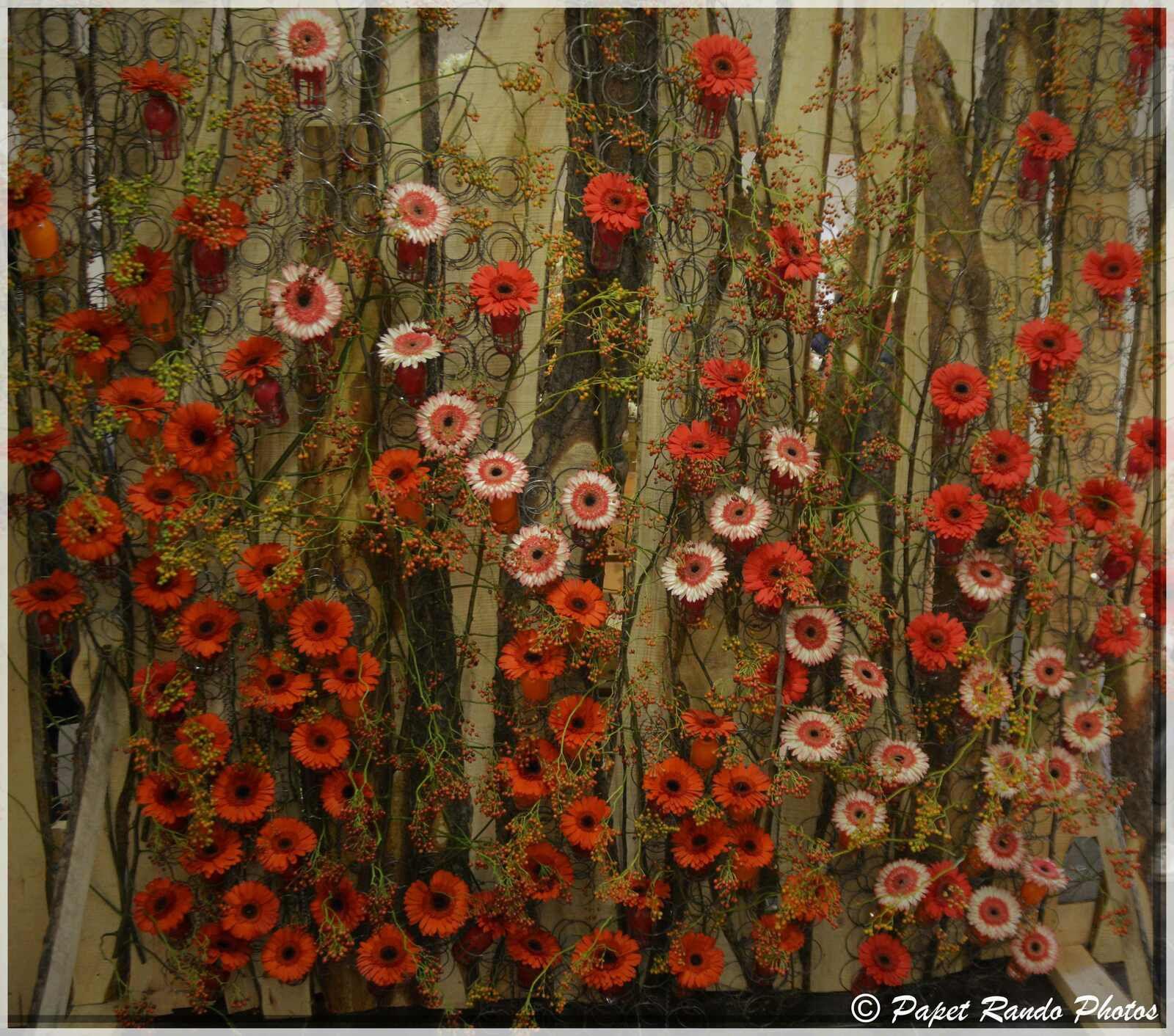 Dans un cadre magnifique, un Fleur Amour au Top comme chaque année