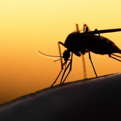 Santé publique (Rwanda, Bénin, Centrafrique, Soudan du Sud etc..): Les enfants particulièrement touchés, le paludisme devient résistant au traitements en Afrique.