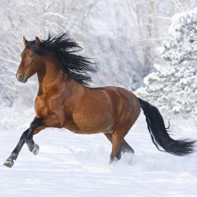 Qu'est ce que c'est l'équitation ?