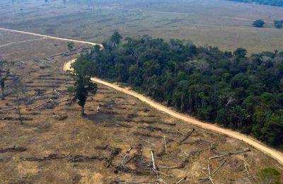 La déforestation de l'Amazonie s'accélère et pourrait la conduire à « un point de non-retour »