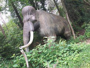 Je découvre des animaux préhistoriques dans une forêt