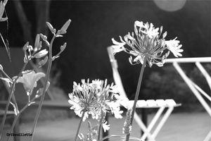 P52#19_Noir et blanc