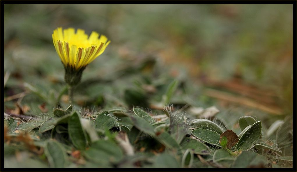 """Z'Album"" : fleurs-3"