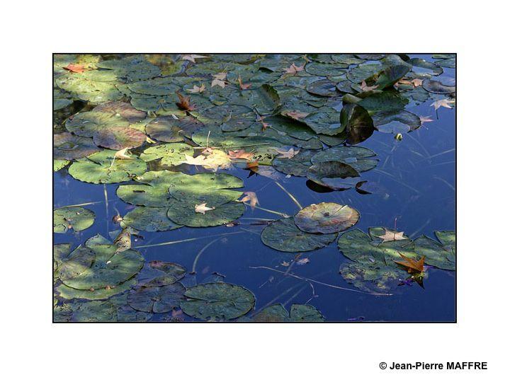 Un océan de beauté et de poésie dans un étang.
