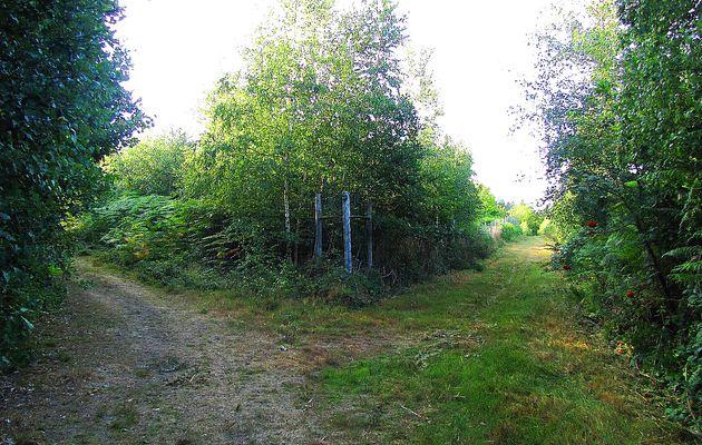carrefour_Laie de la Chaussée de l'Etang_Sentier vers la Route Tortue
