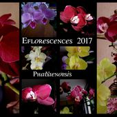 Eflorescence 2017 - Orchidium-Vaunage